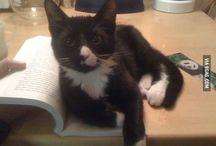 livros e gatos