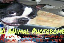 animal funny photobombs