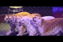 Animaux de cirque - Cirque Arlette Gruss