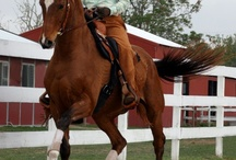 Horse life!