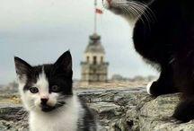 Istanbul'un kedileri