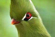 fina fåglar