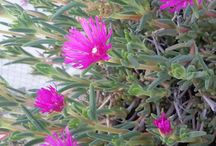 Fiori, piante e campagna / Fiori, piante e campagna