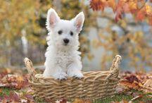 White Dog Puppy In Basket HD Wallpaper   Famous HD Wallpaper
