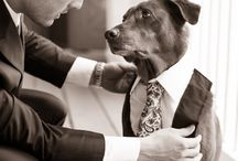 Furry Friends on your Special Day /  #AffairsbyBrittany Call 218-847-3788 for your appointment. contact@affairsbybrittany or visit affarisbybrittany.com We would LOVE to help you find your PERFECT Wedding attire!