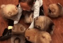 Potatoes !!