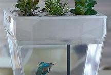 Grow it yourself! / Garden ideas / by Nicole Fry