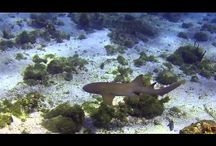 Carriacou Aquatic Life / Photos & videos of Carriacou's beautiful aquatic life