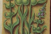 horae   bestiarum vocabulum   illustratio