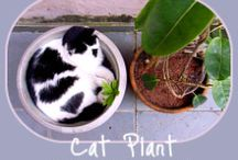 Cat-Safe House Plants