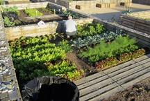 Urban allotment gardens