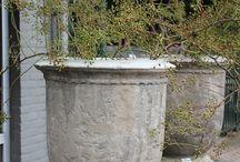 potten bloemen planten