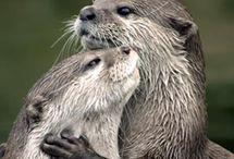 adorables créatures / animaux de toutes sortes