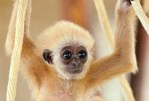 Amazing animals / by Stephanie Lena