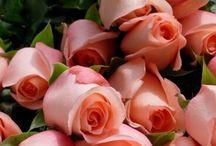 Gyönyörű rózsák virágok csoport