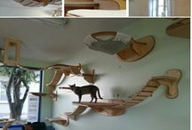 Home - Cats Room