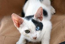 Lovely coloured eyes / Just beautiful