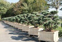 Planten voor terras en tuin / Planten om je terras of tuin gezellig te maken.