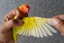 12 Fakta Menarik Tentang Lovebird