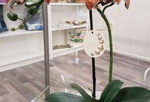 Orchideeën decoratie