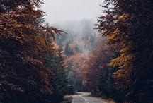 Paesaggi