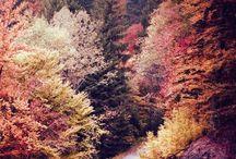 herfst / Wat heb je te koop? 100.000 bladeren op een hoop. / by Daphne Dekker