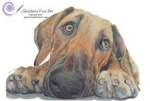 Pet Portraits Sheldene Fine Art / Realistic drawings of pets done by Sheldene Fine Art in coloured or graphite pencils.