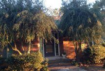 Garden/landscape restoration and pruning