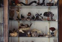 Cabinet of Curiosities / by Eve Sinaiko