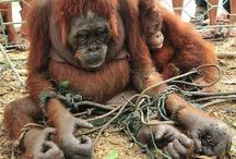 stoppt Menschen  die Tiere nicht liebevoll behandeln