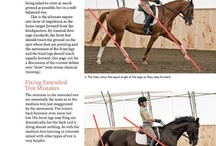 Fundamentals of English Riding / by Janice