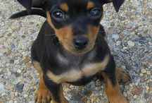 Our future dog