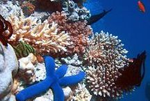 Coral Reefs - For Ed / by Francine Bacchini