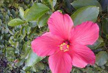 flores bonitas en el jardin