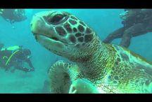 Turtle diving in Tenerife