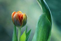 Bossen bloemen