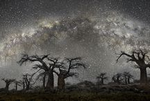 The world's Oldest Trees / The photographer Beth Moon captured the ancient tress under stars and look what he made out of not so beautiful looking trees.