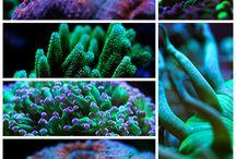 aqua reef