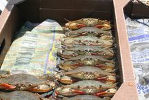Soft Shell Crabs / Everything Soft Shell Crabs @ J&W Seafood/Crabville