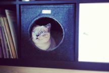 niche à chats