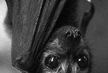 Bats ❤️