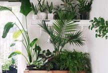 Room Jungle Decor
