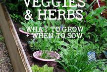 Useful Gardening Ideas
