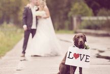 Wedding Ideas / Collection of my wedding photos and ideas I wish I saw before my big day!
