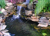 Pond ideas / by Deanna Walls