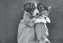 Hündchen und Kätzchen