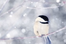 Winter Wonderland / by Mary Martin
