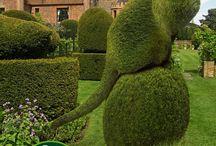 Creative Plants In The Garden