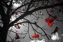 hüznüm içimdeki son yaprağımsın
