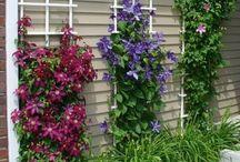 Front yard / Side yard